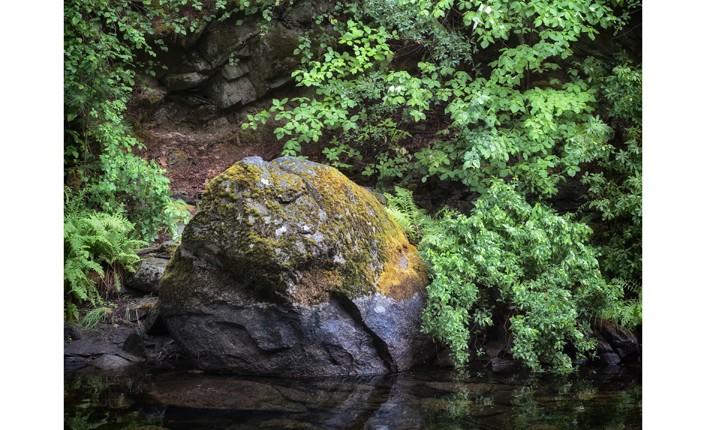 Tmessick-BTC-River_Rock_Foliage